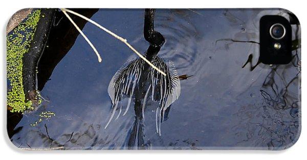 Swimming Bird IPhone 5s Case by David Lee Thompson