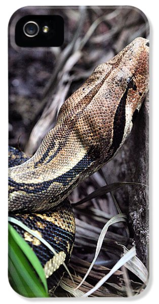 The Boa IPhone 5s Case by JC Findley