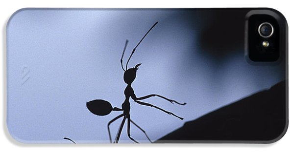 Far North Queensland iPhone 5s Case - The Defensive Silhouette Of A Green by Jason Edwards