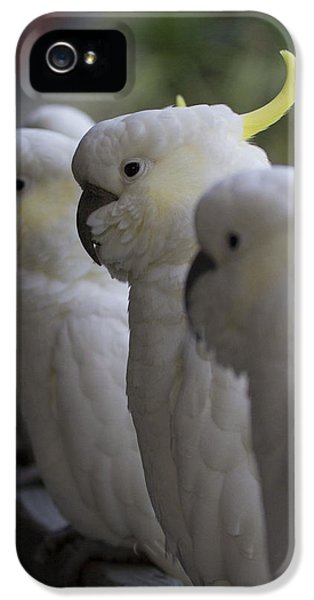 The Line-up IPhone 5s Case by Douglas Barnard