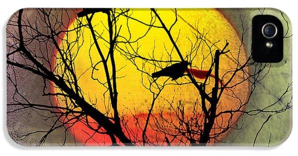 Three Blackbirds IPhone 5s Case by Bill Cannon