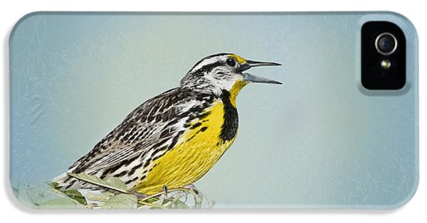 Meadowlark iPhone 5s Case - Western Meadowlark by Betty LaRue
