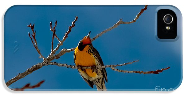 Meadowlark iPhone 5s Case - Western Meadowlark by Mitch Shindelbower