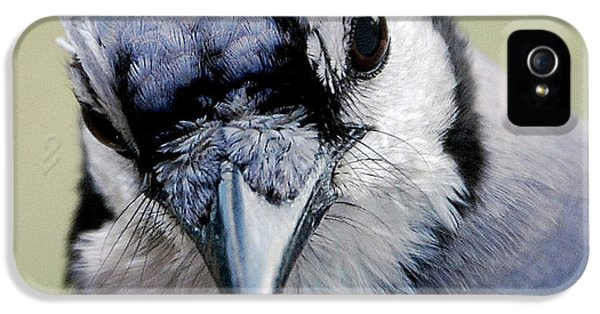 Bluejay iPhone 5s Case -  Blue Jay by Skip Willits