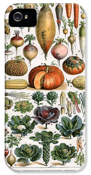 Illustration Of Vegetable Varieties IPhone 5s Case