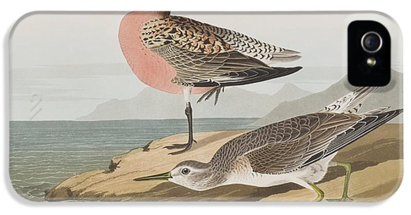 Red-breasted Sandpiper  IPhone 5s Case by John James Audubon