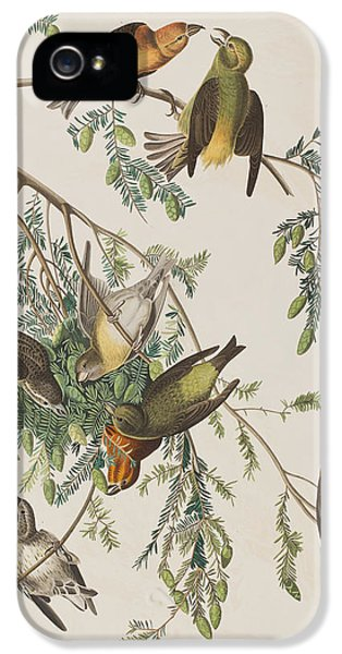 Crossbill iPhone 5s Case - American Crossbill by John James Audubon