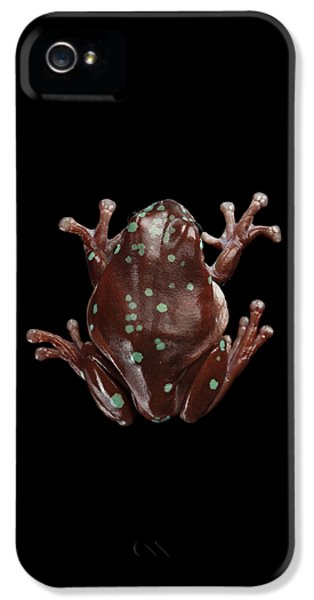 Australian Green Tree Frog, Or Litoria Caerulea Isolated Black Background IPhone 5s Case by Sergey Taran