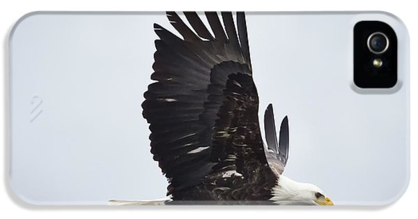Bald Eagle IPhone 5s Case by Ricky L Jones