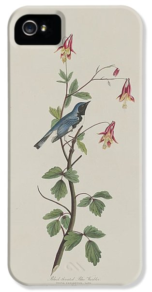 Black-throated Blue Warbler IPhone 5s Case by Rob Dreyer