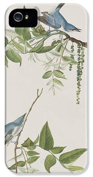 Flycatcher iPhone 5s Case - Blue Grey Flycatcher by John James Audubon
