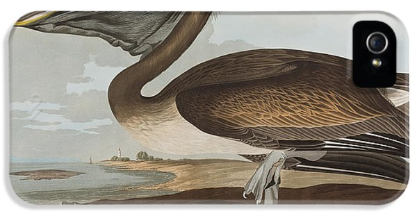 Brown Pelican IPhone 5s Case by John James Audubon