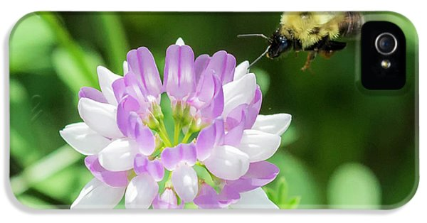 Bumble Bee Pollinating A Flower IPhone 5s Case by Ricky L Jones