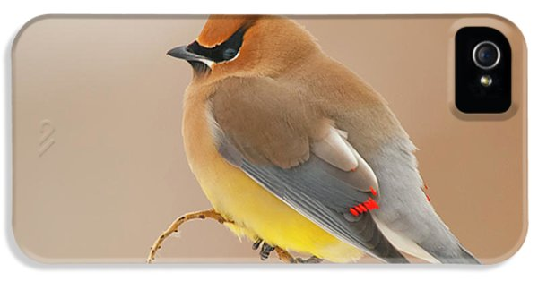 Cedar Wax Wing IPhone 5s Case