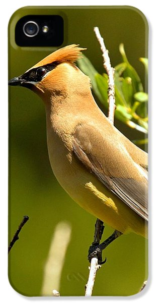 Cedar Waxwing Closeup IPhone 5s Case
