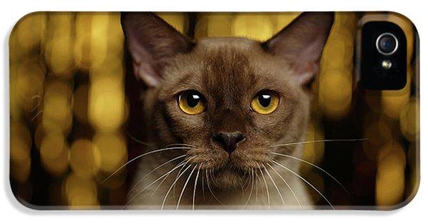 Cat iPhone 5s Case - Closeup Portrait Burmese Cat On Happy New Year Background by Sergey Taran