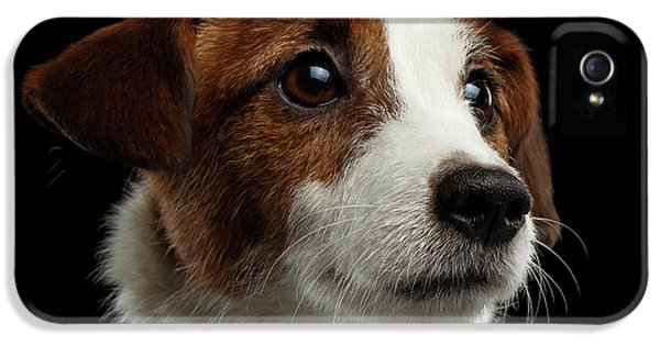 Closeup Portrait Of Jack Russell Terrier Dog On Black IPhone 5s Case by Sergey Taran