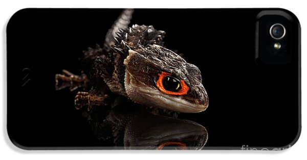 Closeup Red-eyed Crocodile Skink, Tribolonotus Gracilis, Isolated On Black Background IPhone 5s Case by Sergey Taran
