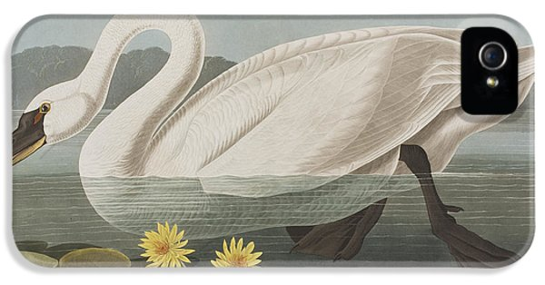 Common American Swan IPhone 5s Case by John James Audubon