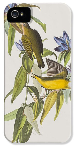 Connecticut Warbler IPhone 5s Case