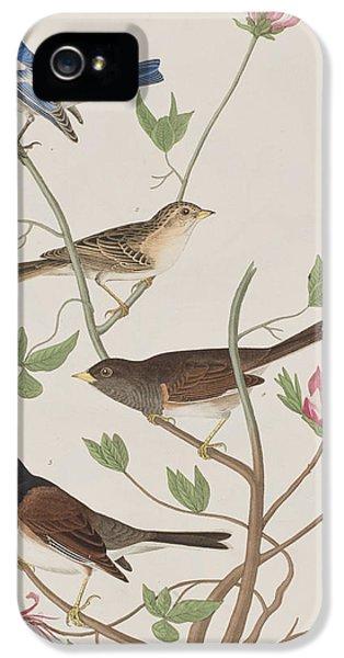 Finches IPhone 5s Case by John James Audubon