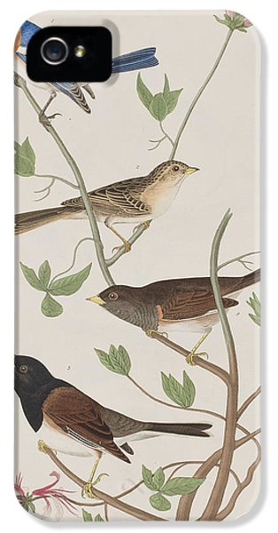 Finches IPhone 5s Case