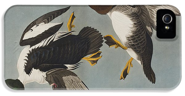 Golden-eye Duck  IPhone 5s Case by John James Audubon