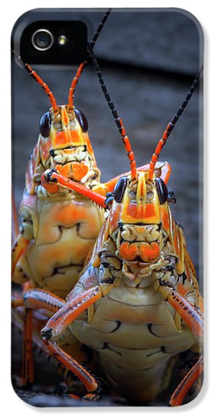Grasshoppers In Love IPhone 5s Case by Mark Andrew Thomas