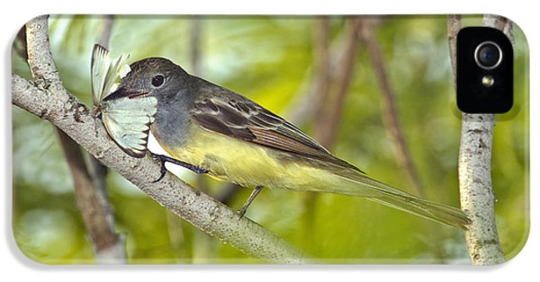 Great Crested Flycatcher IPhone 5s Case by Anthony Mercieca