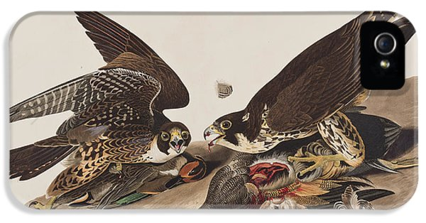 Great-footed Hawk IPhone 5s Case by John James Audubon