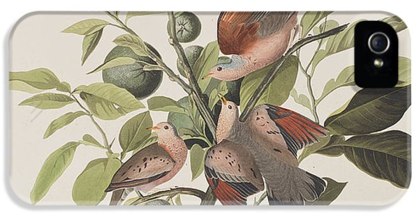Ground Dove IPhone 5s Case
