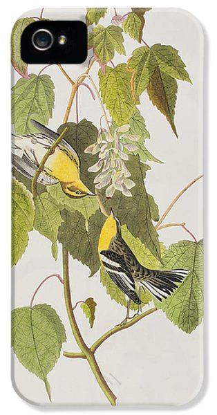 Hemlock Warbler IPhone 5s Case