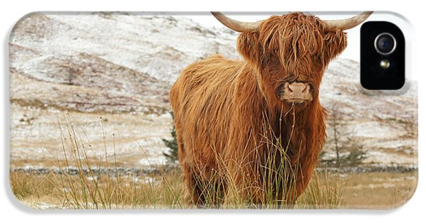 Cow iPhone 5s Case - Highland Cow by Grant Glendinning