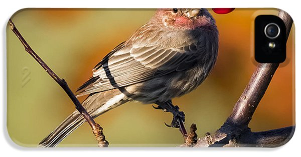 House Finch IPhone 5s Case by Ricky L Jones