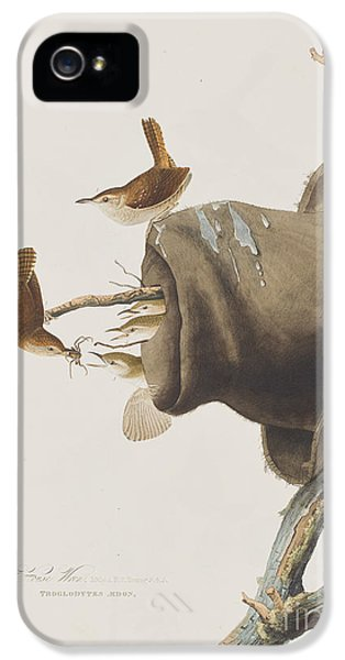 House Wren IPhone 5s Case