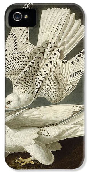 Iceland Or Jer Falcon IPhone 5s Case by Rob Dreyer