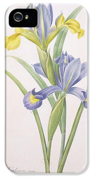 Iris Xiphium IPhone 5s Case by Pierre Joseph Redoute