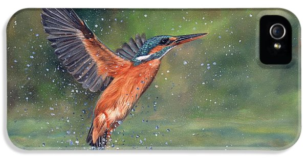 Kingfisher iPhone 5s Case - Kingfisher by David Stribbling
