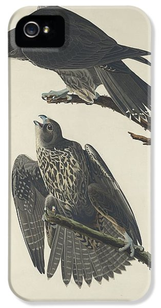 Labrador Falcon IPhone 5s Case by Rob Dreyer
