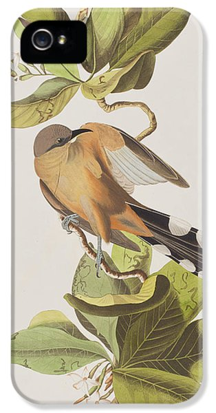 Mangrove Cuckoo IPhone 5s Case