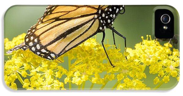 Monarch Butterfly IPhone 5s Case by Ricky L Jones