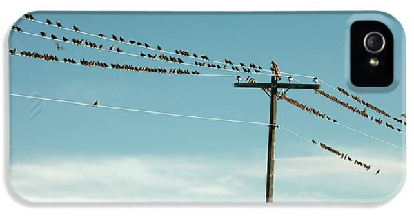 Starlings iPhone 5s Case - Not Like The Others by Todd Klassy