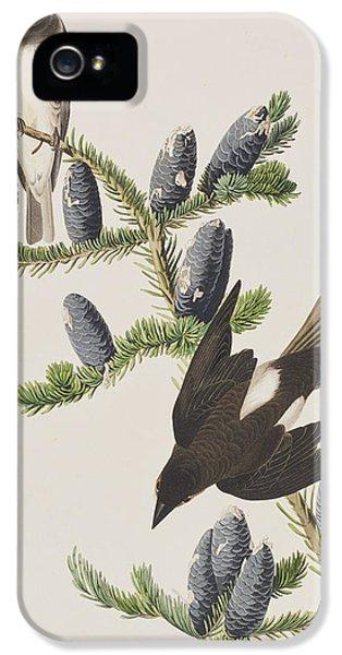 Olive Sided Flycatcher IPhone 5s Case by John James Audubon