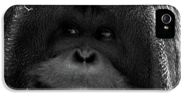 Orangutan IPhone 5s Case by Martin Newman