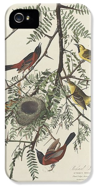 Orchard Oriole IPhone 5s Case by Rob Dreyer
