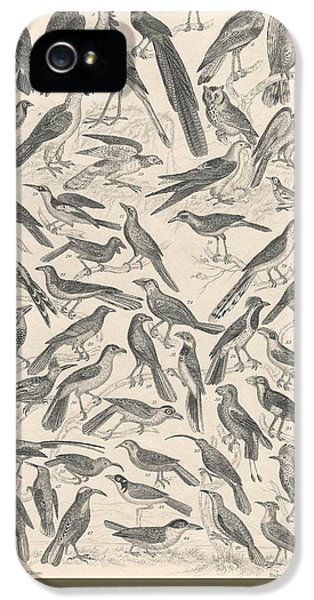 Condor iPhone 5s Case - Ornithology by Dreyer Wildlife Print Collections