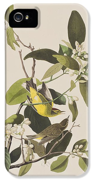 Palm Warbler IPhone 5s Case