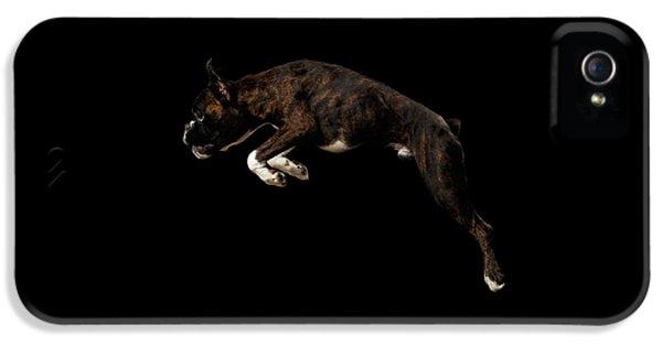 Dog iPhone 5s Case - Purebred Boxer Dog Isolated On Black Background by Sergey Taran