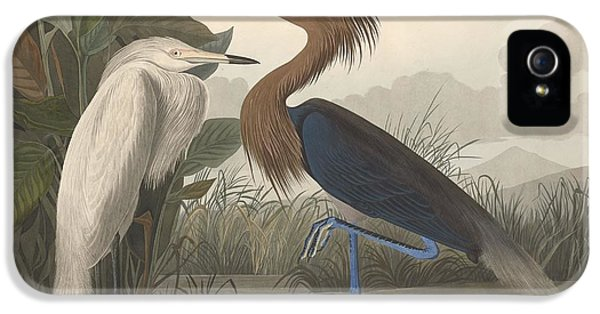Ibis iPhone 5s Case - Purple Heron by Dreyer Wildlife Print Collections