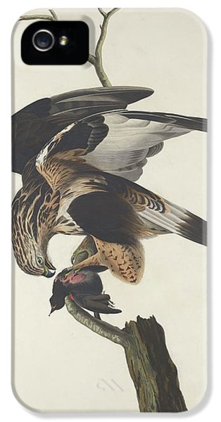 Rough Legged Falcon IPhone 5s Case by Rob Dreyer
